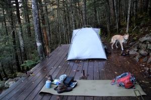 Tent Platforms at Liberty Springs Tentsite