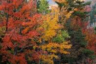 Fall at it's peak