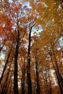 Our yellow forest