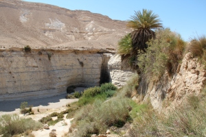 Hidden in the desert