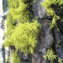 Who doesn't love tree moss?